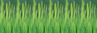 стеновая панель трава